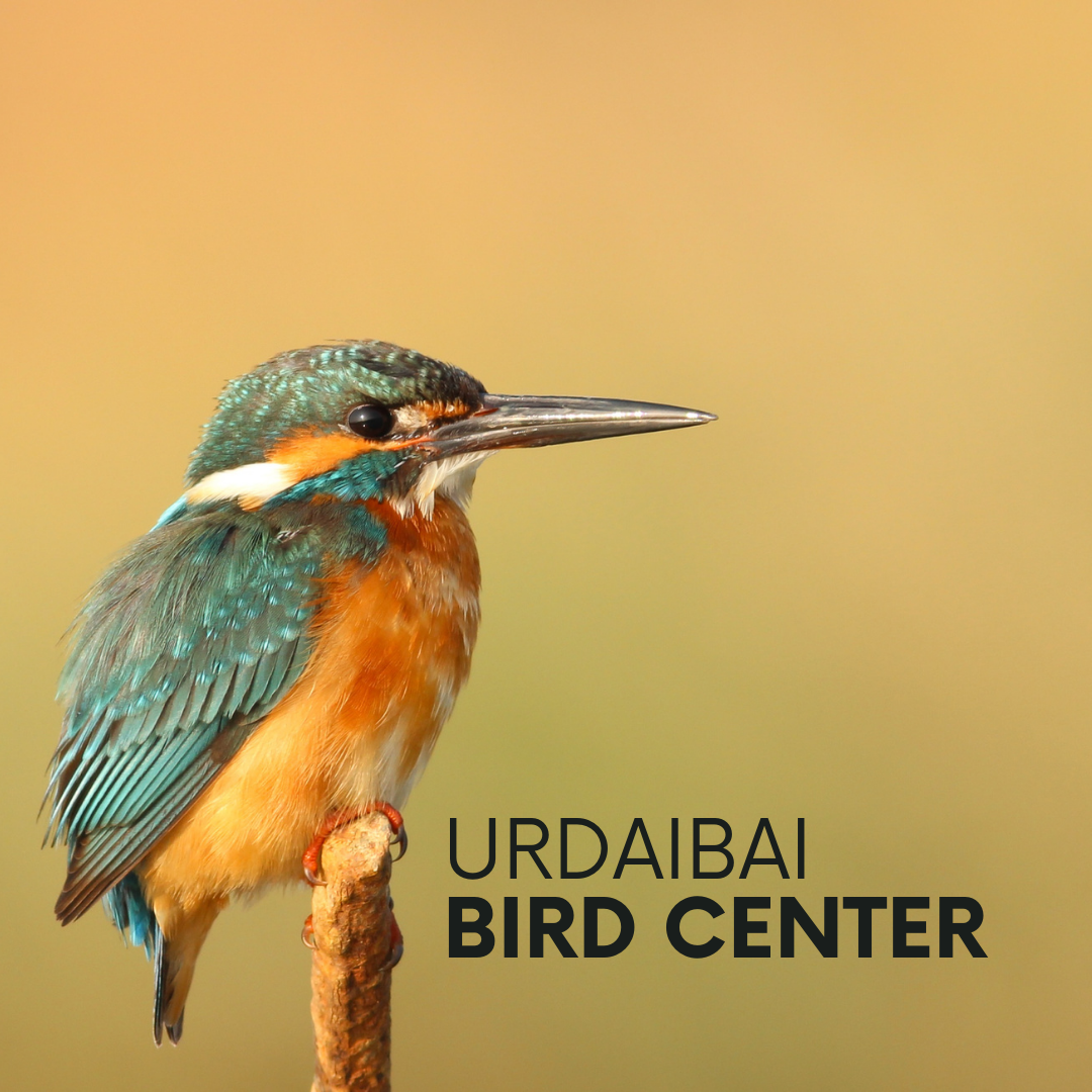 Portada: pájaro martín pescador con texto a su lado: urdaibai bird center