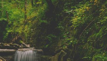 Fotografía con un riachuelo, árboles, arbustos, piedras y mucho verdín